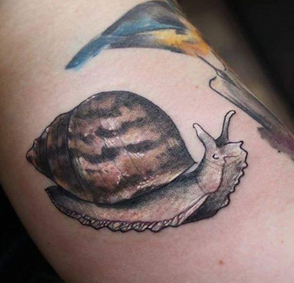 Snail Wildlife Tattoos
