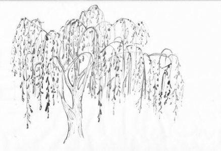 Family Tree Tattoo With Names (221)