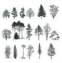Family Tree Tattoo With Names (26)