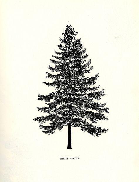 Family Tree Tattoo With Names (81)