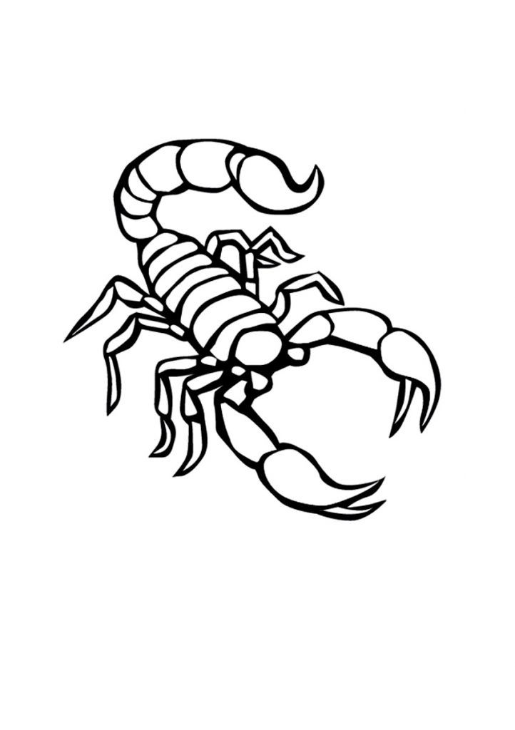 Scorpio Zodiac Horoscope Constellation Sign Symbol Tattoo (168)