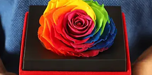 Big Forever Rainbow Rose In Black Velvet Box